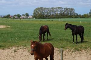 Flink wie Pferd und Esel: mlDonkey ist im Netzwerk schnell unterwegs.